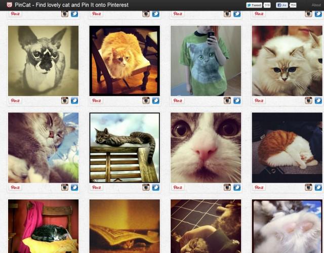 Ще дам за пример сайта PinCat, който е клонинг на Pinterest. Там се публикуват и споделят снимки на... котки.