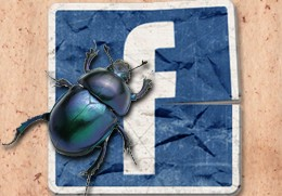 facebook-nov-bug